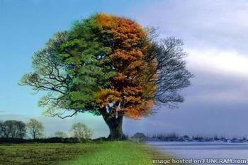 13819272_four_seasons_02_xlarge