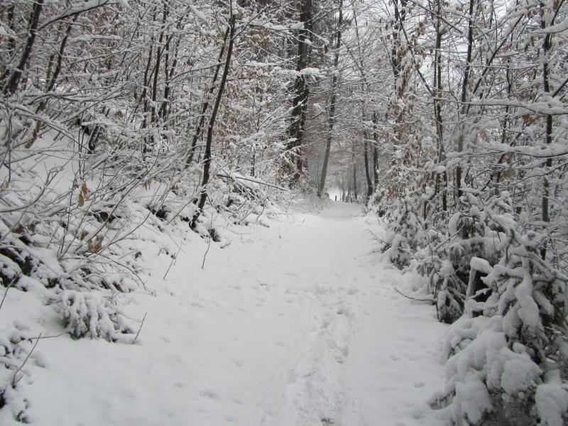 Foto: Kristijan Cizerl , sneg marca 2013